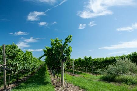 Weingut Wurzinger - Weingarten