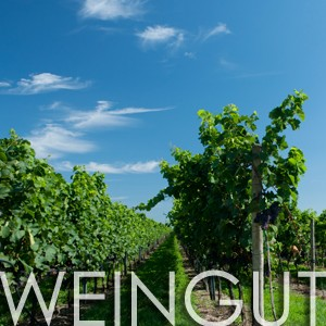 Weingut Wurzinger