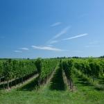 Wurzinger Weingarten